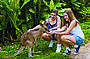 Friends in the Rainforest Package [Kuranda Koala Gardens & Birdworld Kuranda entry]